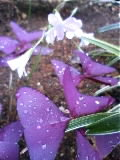 お気に入り…コトリ雑貨と紫のオキザリス