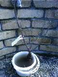 寒風の中、大苗の植え付け…タキイから届いたディオレサンス