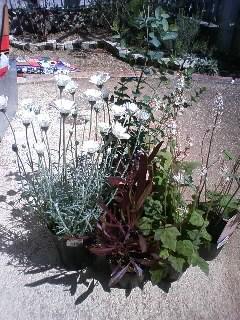 植花園のセール(*'‐^)-☆