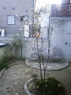 2010年ジューンベリーの花
