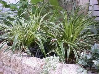 梅雨どきの日陰の庭