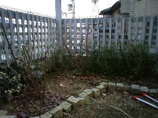 今年初の庭仕事…イングリッシュローズの剪定