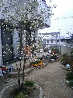 ジューンベリーの花が散る〜