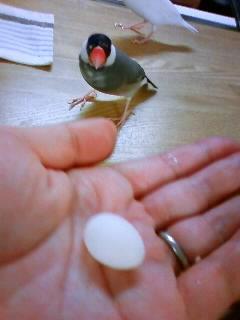 クルミの産卵…2011、5、7