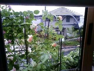 雨のエブリン、コガネムシ退治