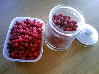 ジューンベリーの収穫