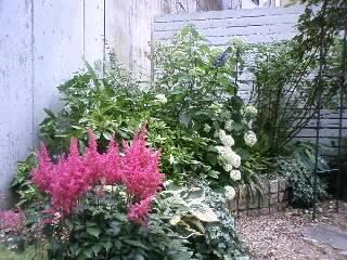 アスチルベと日陰の庭