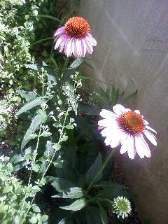 夏の庭に似合う花