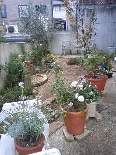 来年の庭を思い描いて…