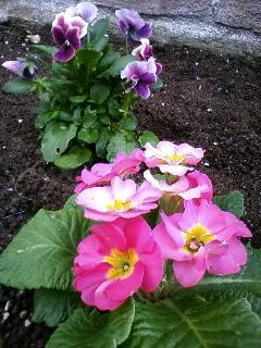 冬花壇づくり