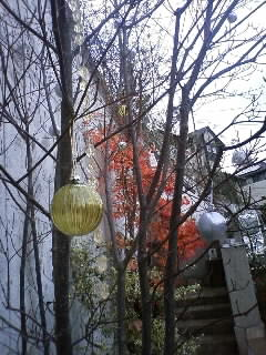 庭もクリスマスの飾り付け